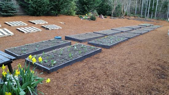 grow vegetables in raised garden beds