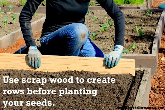 how to plant radish seeds
