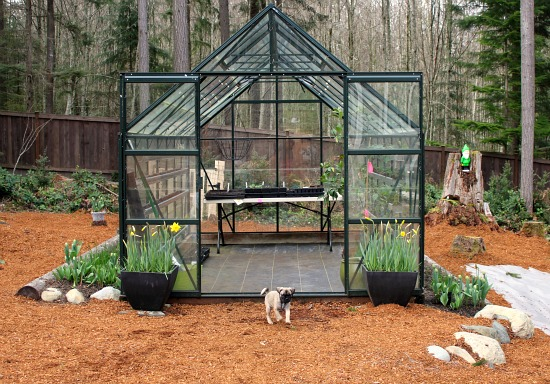 magnum glass greenhouse in march
