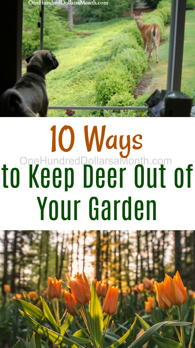 10 ways to keep deer out of your garden one hundred dollars a month