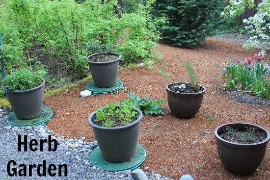 Container Herb Garden - Growing Basil, Sage, Parsley, Rosemary and ...