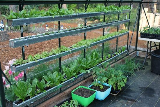 Greenhouse Gutters grow food in gutters