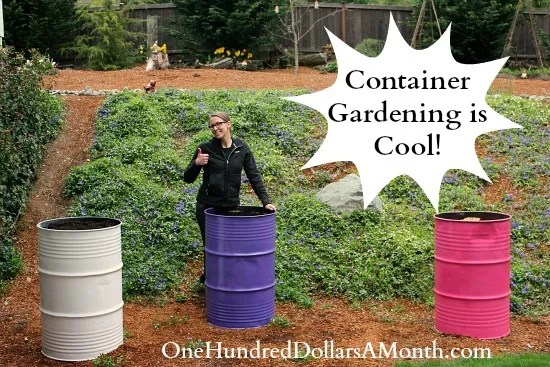 container gardening steel drums