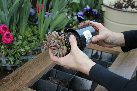 grovert living wall planter frame DIY