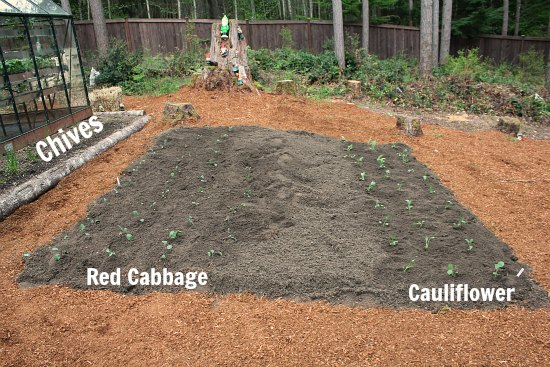 how to make build a raised garden bed