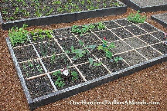 square foot garden grid