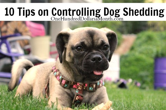 10 Tips on Controlling Dog Shedding