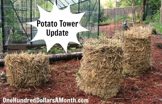 How to build a potato tower picture