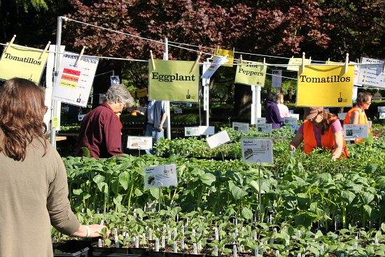 Seattle tilth plant sale