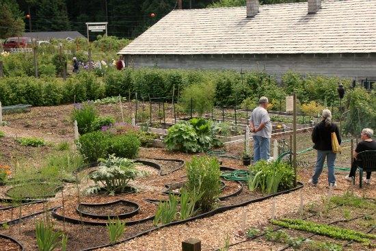 anderson island community garden