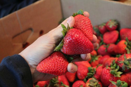 food waste in america strawberries