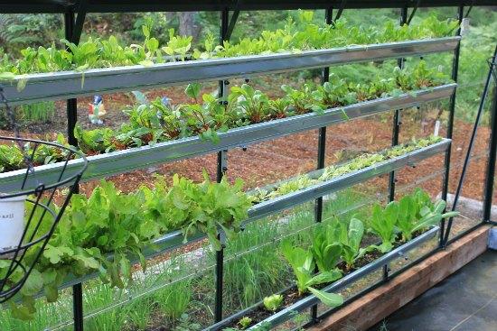 gardening in gutters