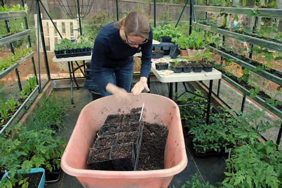 organic gardening grow your own food