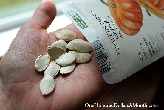 pumpkin seeds botanical interests