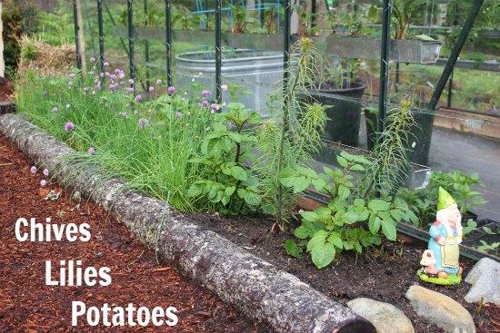 raised garden beds greenhouse