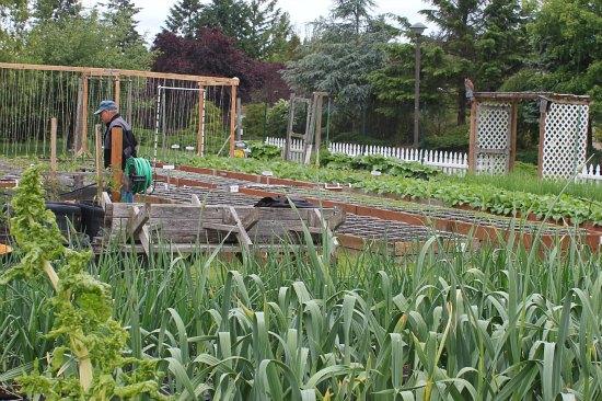 square foot gardening photos