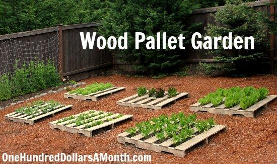wood pallet garden