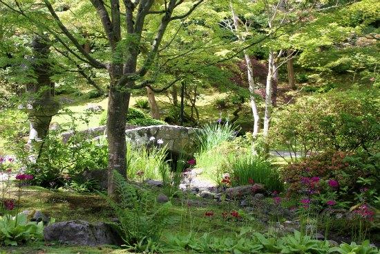 Japanese Tea Garden - Seattle