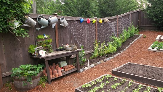 Watering cans hanging on a fence