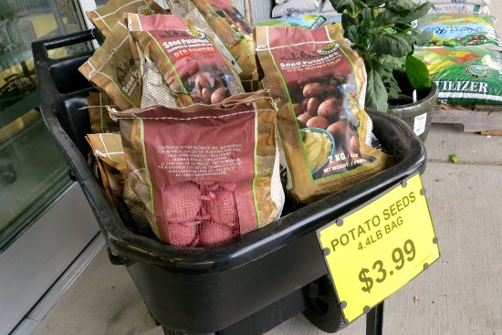 deals on seed potatoes