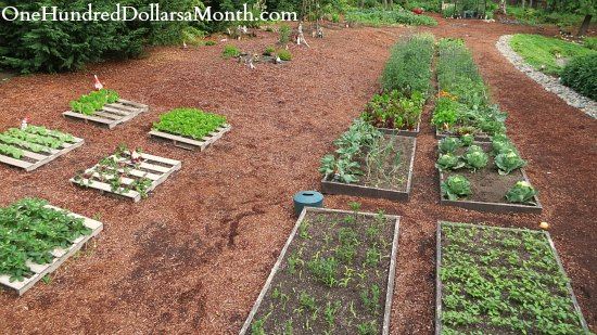pallet garden raised garden beds