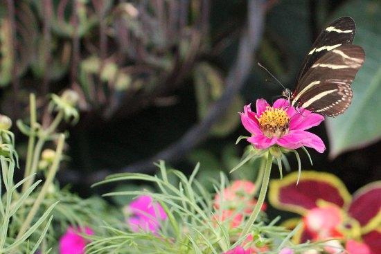 black butterfly on flower