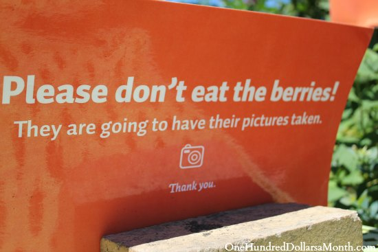 don't eat the berries sign