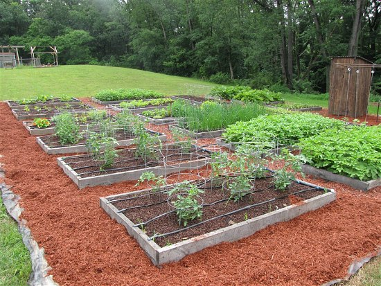 garden boxes cool raised garden beds