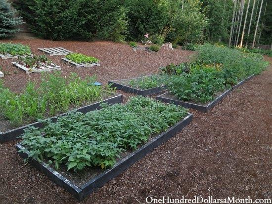 garden boxes organic vegetables