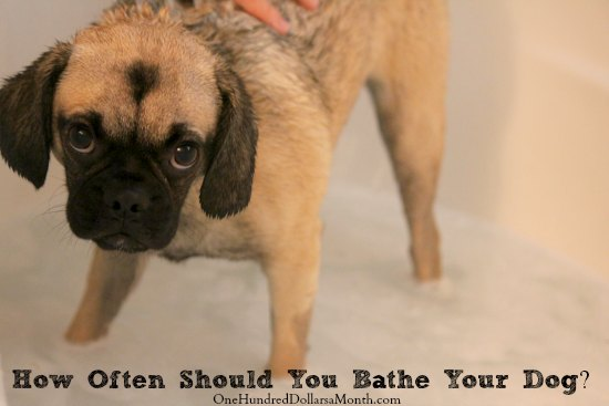 How Often Should You Bathe Your Dog