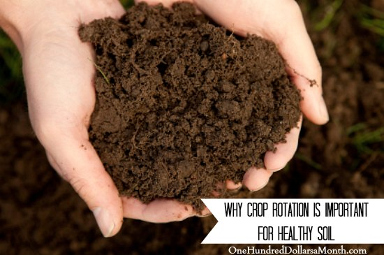 Why Crop Rotation is Important for Healthy Soil