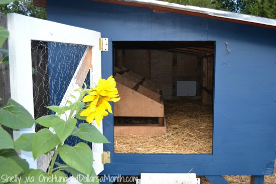 blue chicken coop