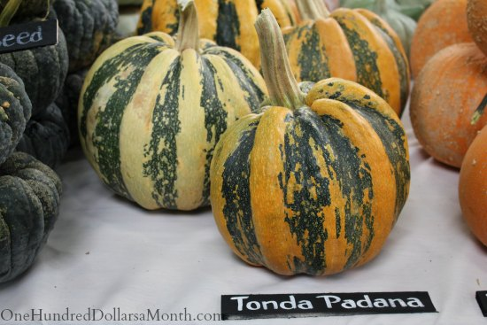 national heirloom exposition tonda padana