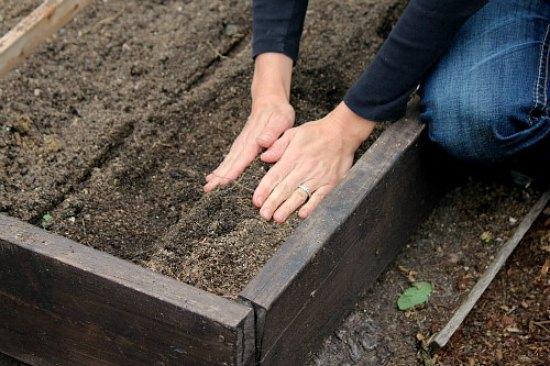 fall-planting-how-to-plant-garlic-bulbs