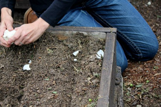 how-to-plant-garlic