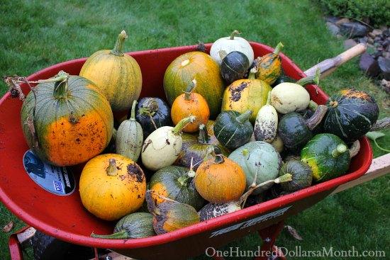 wheelbarrow pumpkins squash