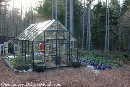 magnum glass greenhouse garden