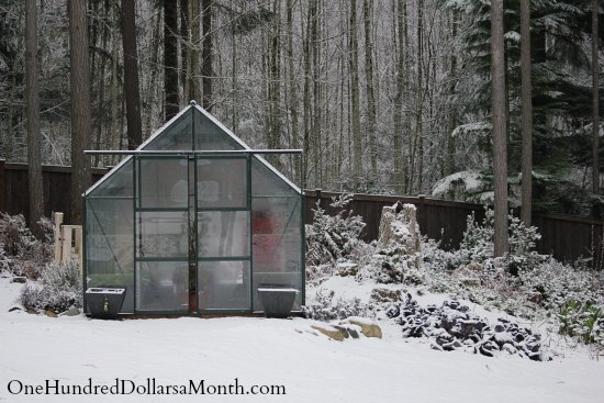 magnum glass greenhouse winter snow