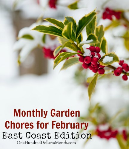 Monthly Garden Chores for February – East Coast Edition