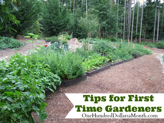 Tips for First Time Gardeners