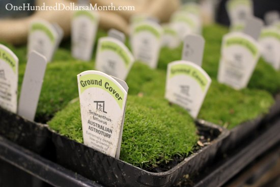australian astroturf Miniature Garden