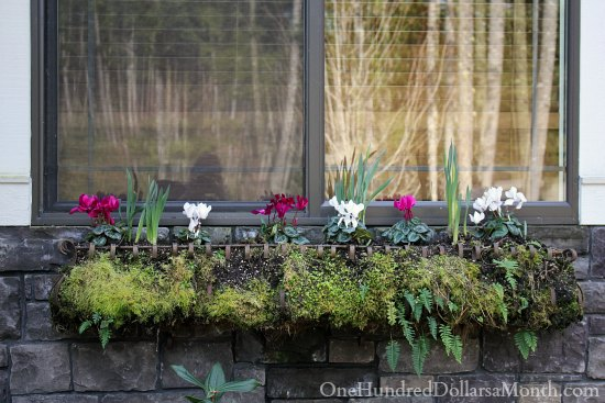 window box ideas