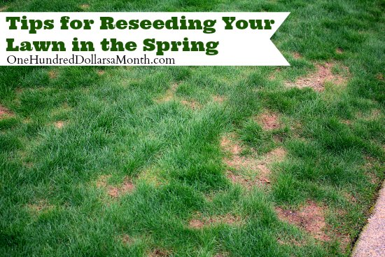 Tips for Reseeding Your Lawn in the Spring