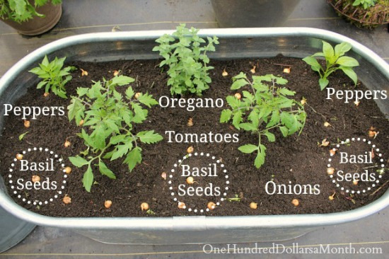 how to plant a pizza garden - Pizza Garden