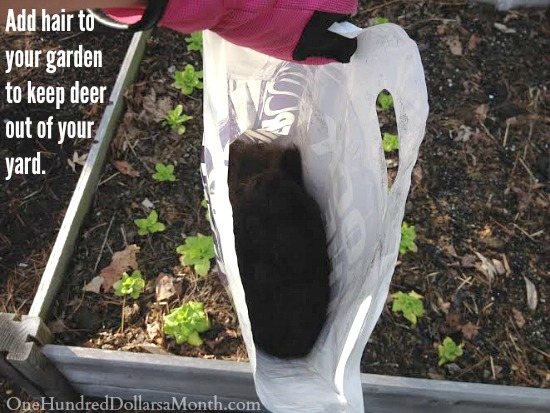 Monthly Garden Chores For May East Coast Edition One