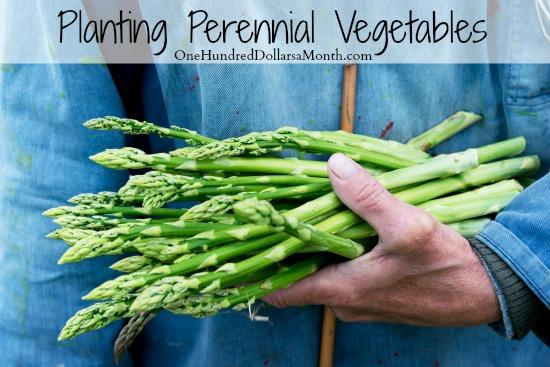 Planting Perennial Vegetables