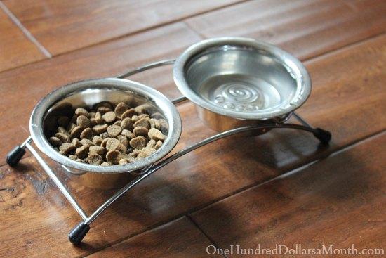 dog food dish