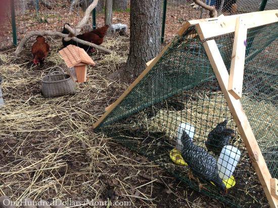 diy chicken tractor