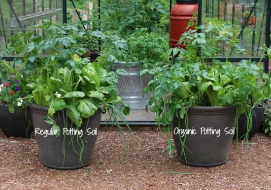 the-battle-of-the-veggies-organic-vs-non-organic-soil