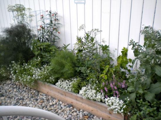 Garden pictures July 2014 023